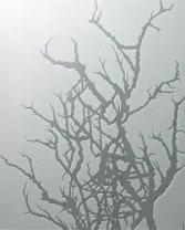 etched tree sansoucie-com