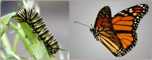butterfly-300x119