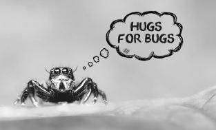 Ahimsa-Nonviolence-to-bugs